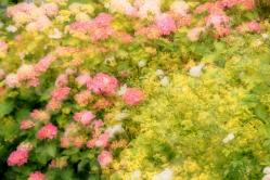Blumen in Pastell