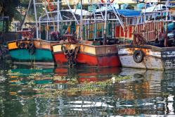 Fischerhafen Kochi