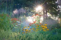 Letzte Sommersonne läßt die Blumen erstrahlen