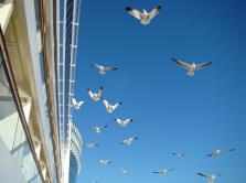 AIDA - frei wie ein Vogel
