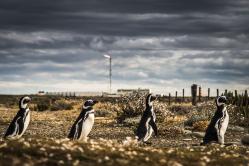 Pinguine unter Feuer