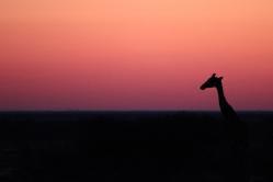 Morning Drive im Etosha Nationalpark