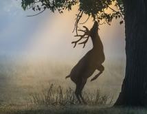 Morning Branch