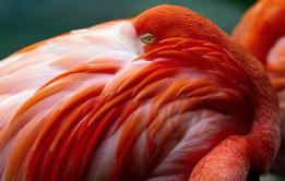 flamingo im winterschlaf