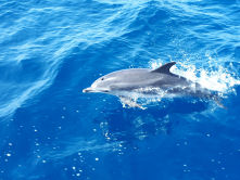 Delfin i spranget