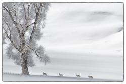 Yellowstone en hiver
