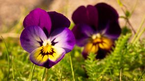 lachende Blumen