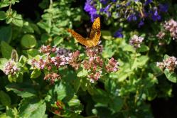 Schmetterling auf Erkundungstour
