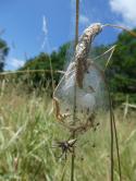 Spinnenkinderstube