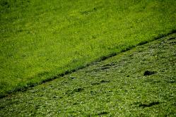 Nur Gras