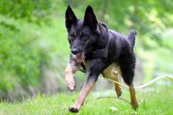 Hunde Sport