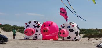 Meerschweine mal anders