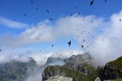 Die Vögel am Himmel