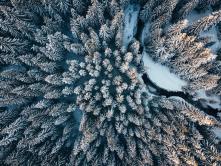 Jizerský les