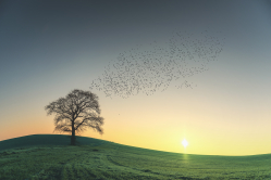 the tree ,the sun and birds