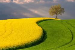Obojena polja