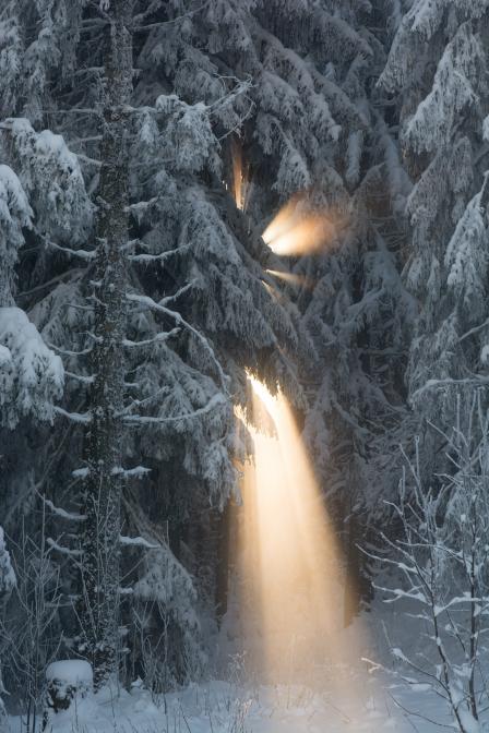Winterwald im Licht