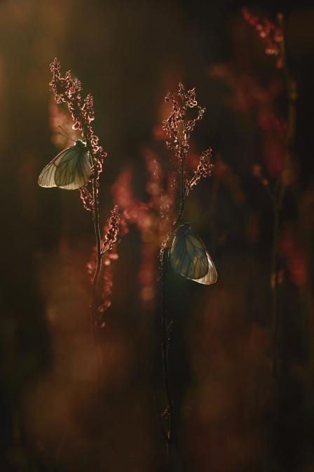 Zachód słońca nad doliną motyli