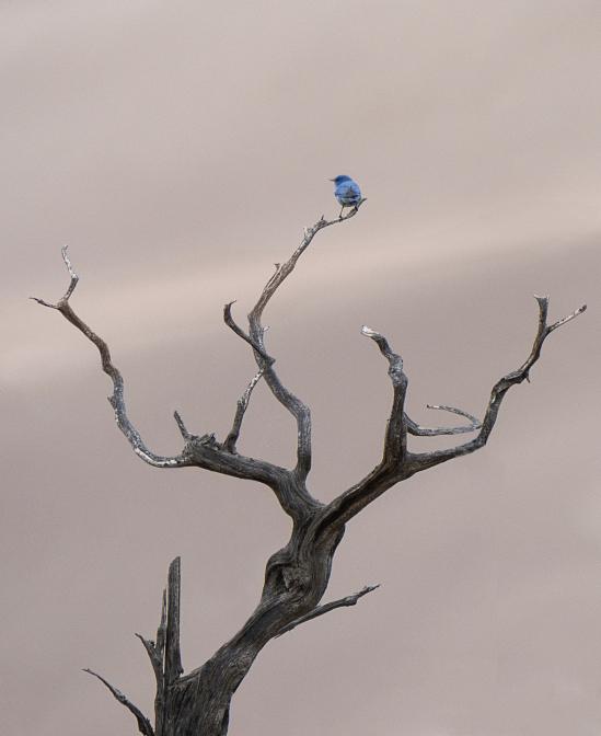 der kleine blaue Vogel
