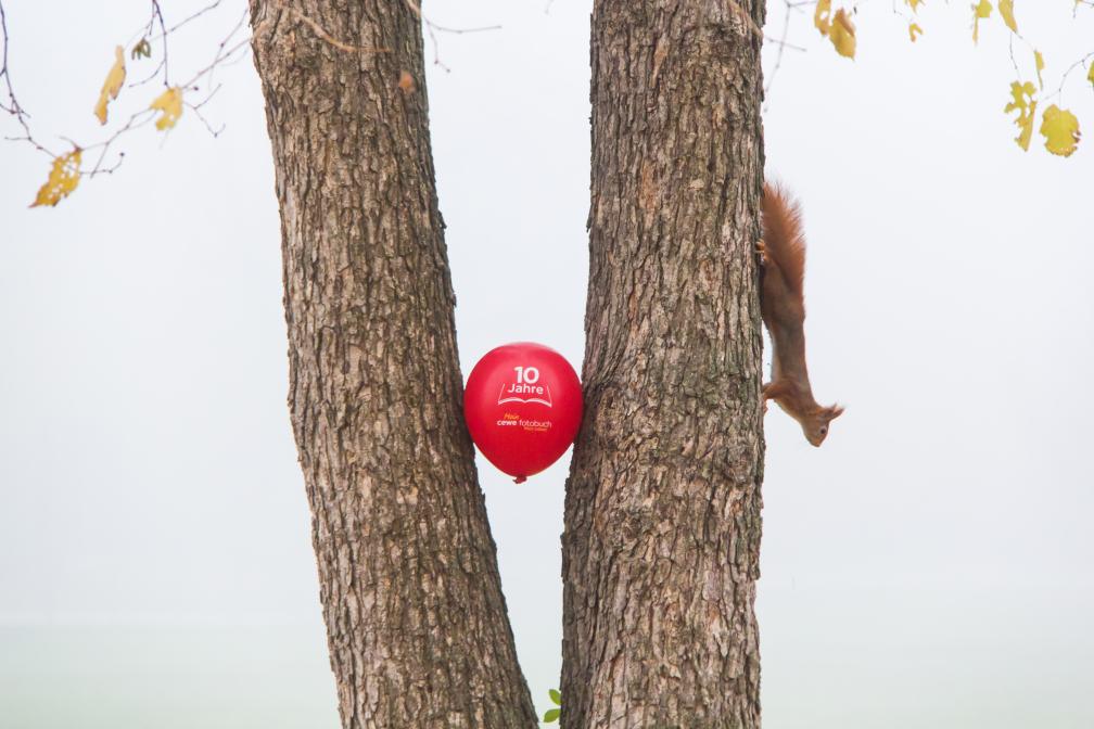 Rotes Eichhörnchen und Roter Ballon
