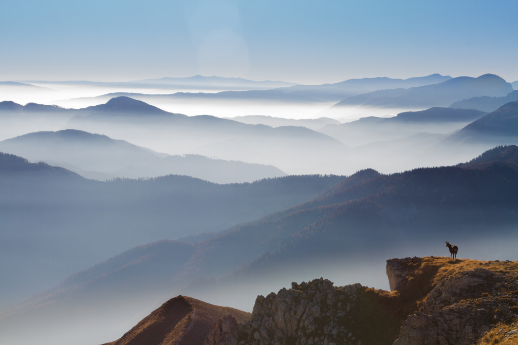 Morgens am Berg