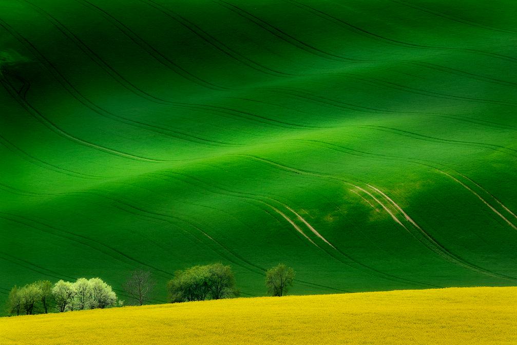 Spring moravian meadows