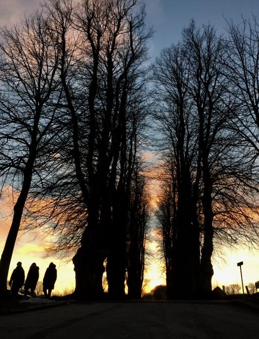 Træer i silhuet