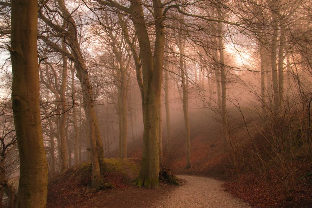 Dis i Marselisborg skoven