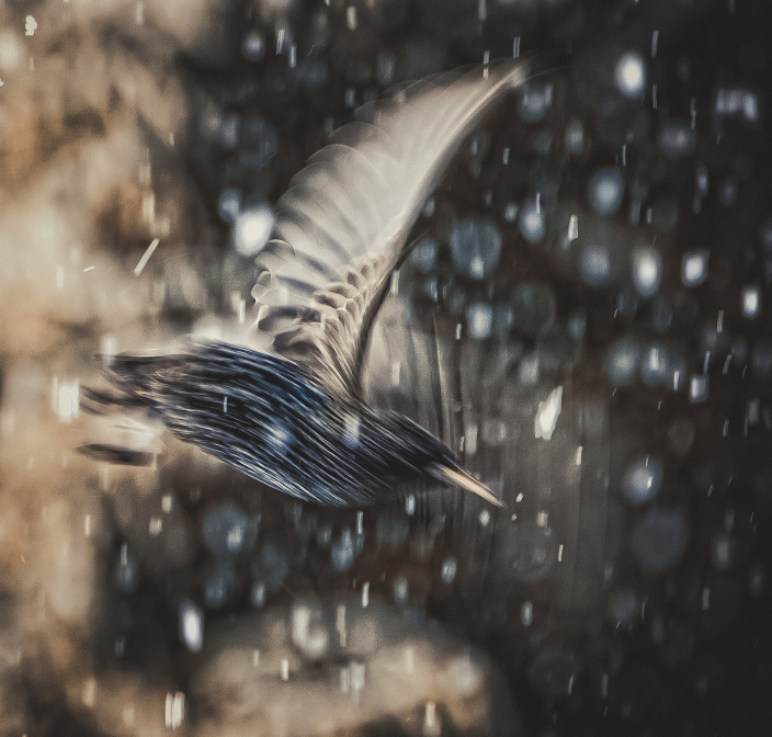 Snowy Starflight