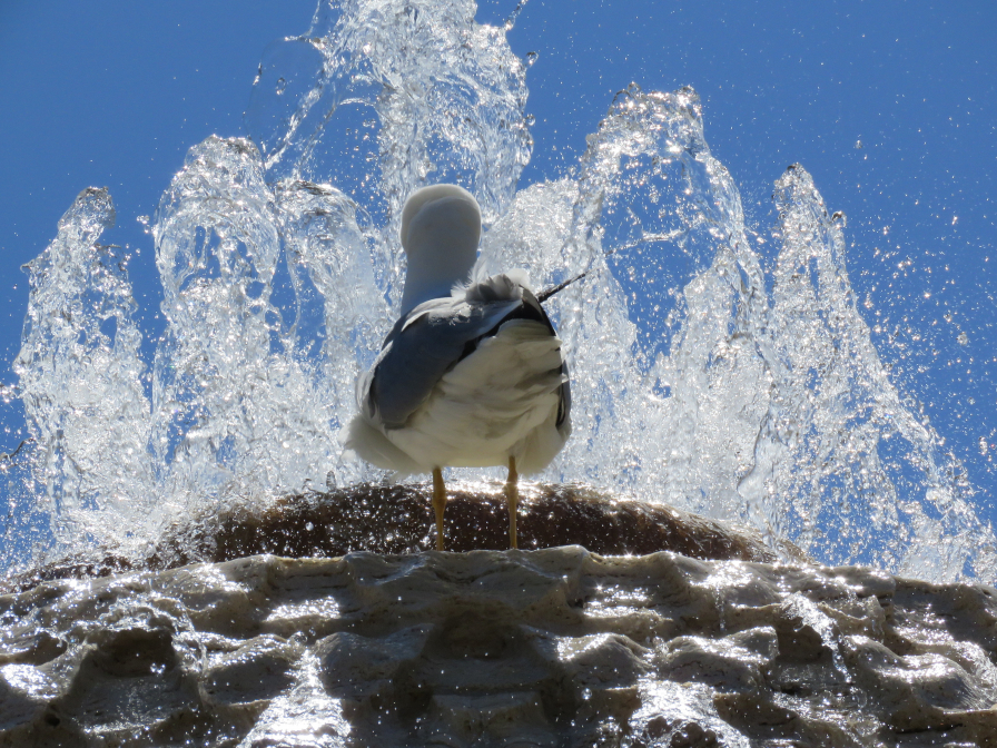 Heilig water voor iedereen