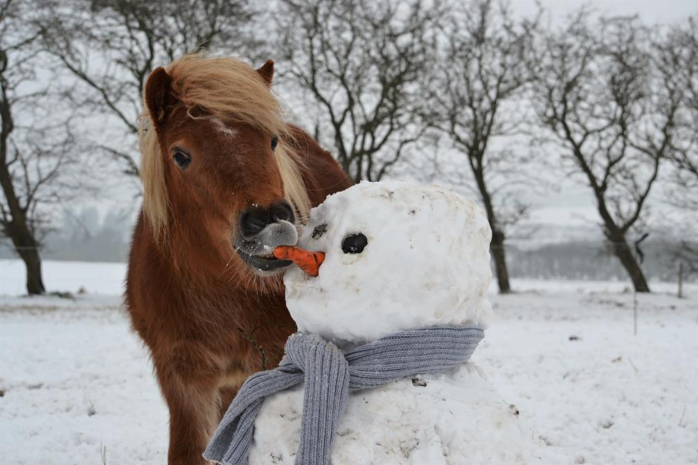 Frederikke og snemand Frost