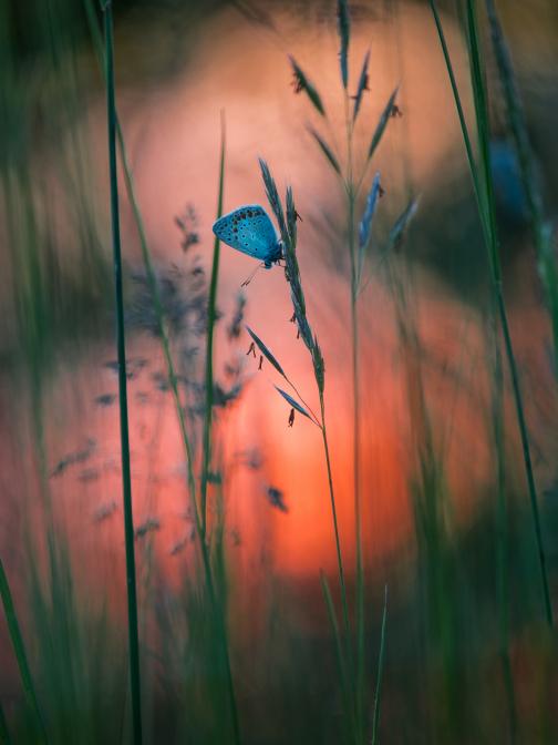 Falter in der Abendsonne
