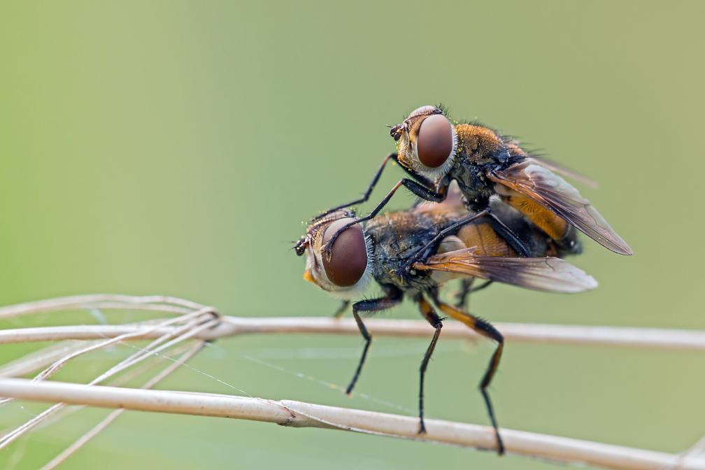Fliegen beim Fliegen machen