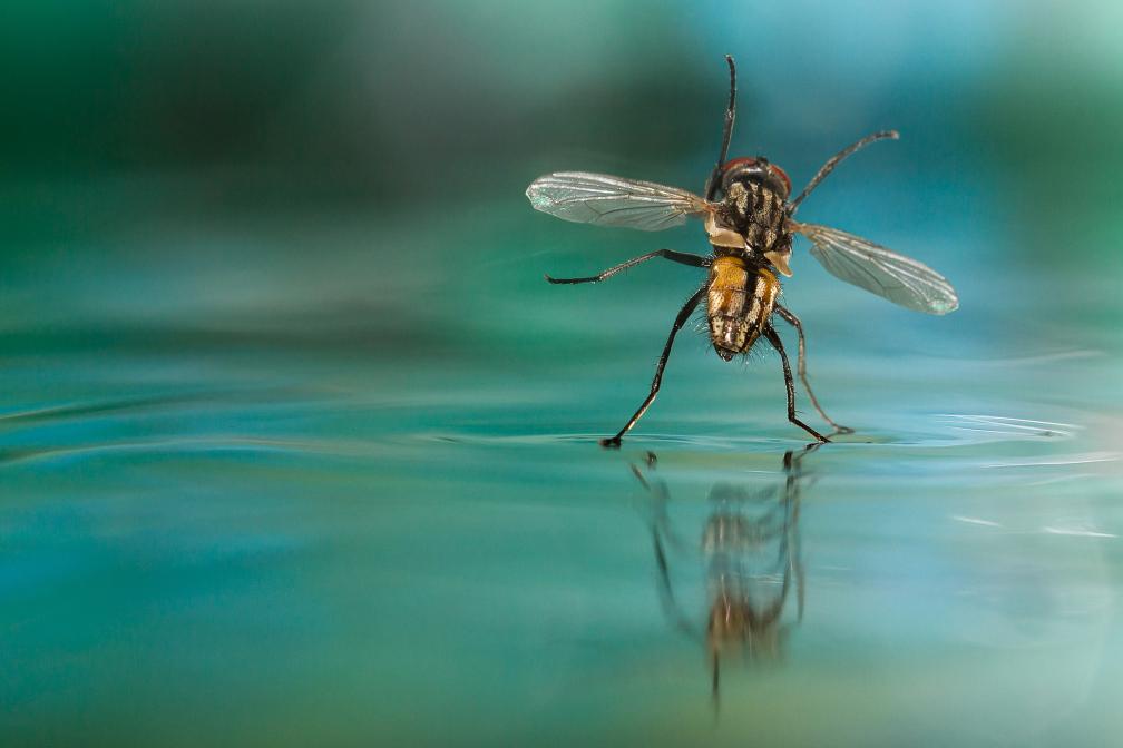 Tanz auf dem Wasser
