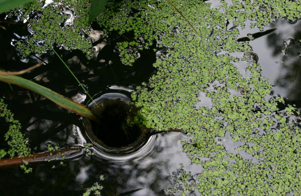 Im Teich