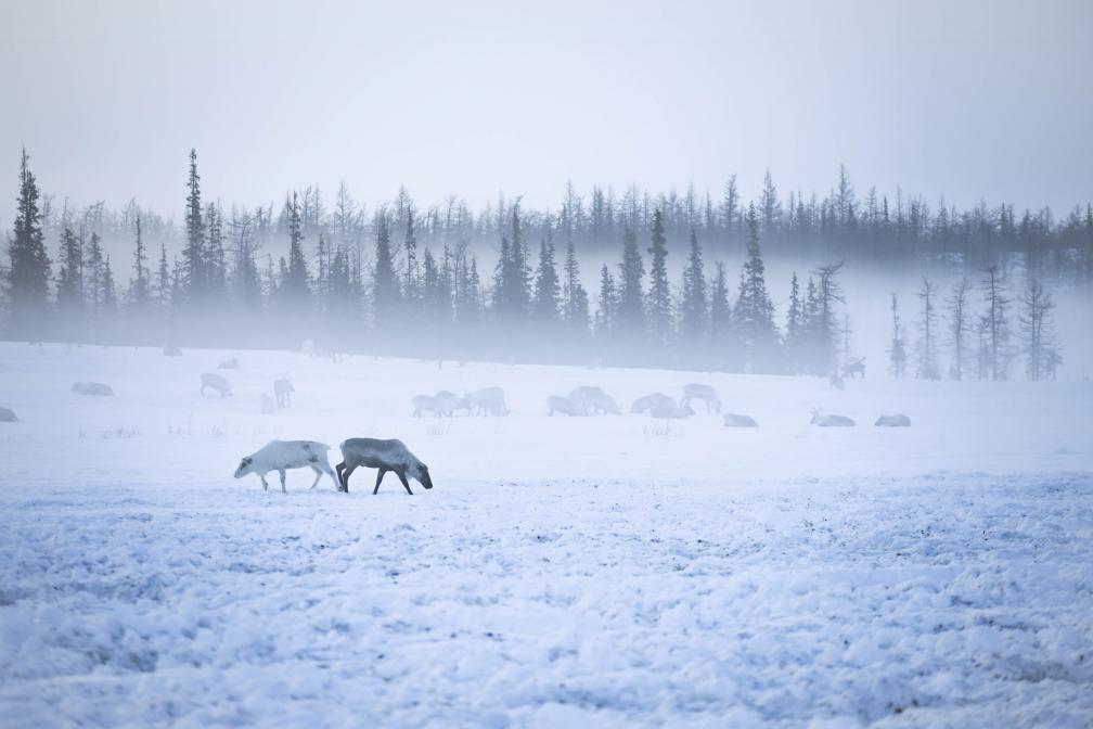 Misty Morning in Siberia