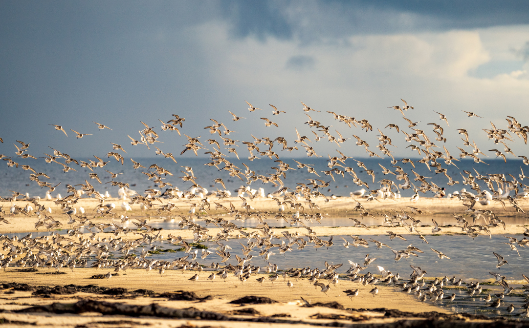Zugvögel beim Übungsflug