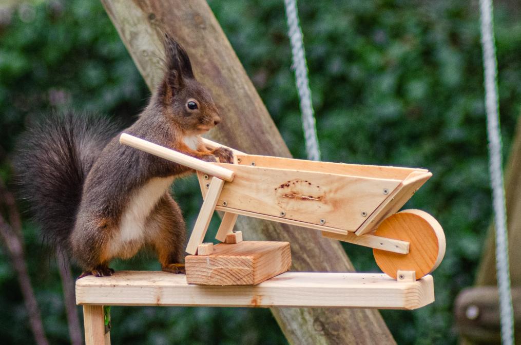 Eichhörnchen bei der Arbeit