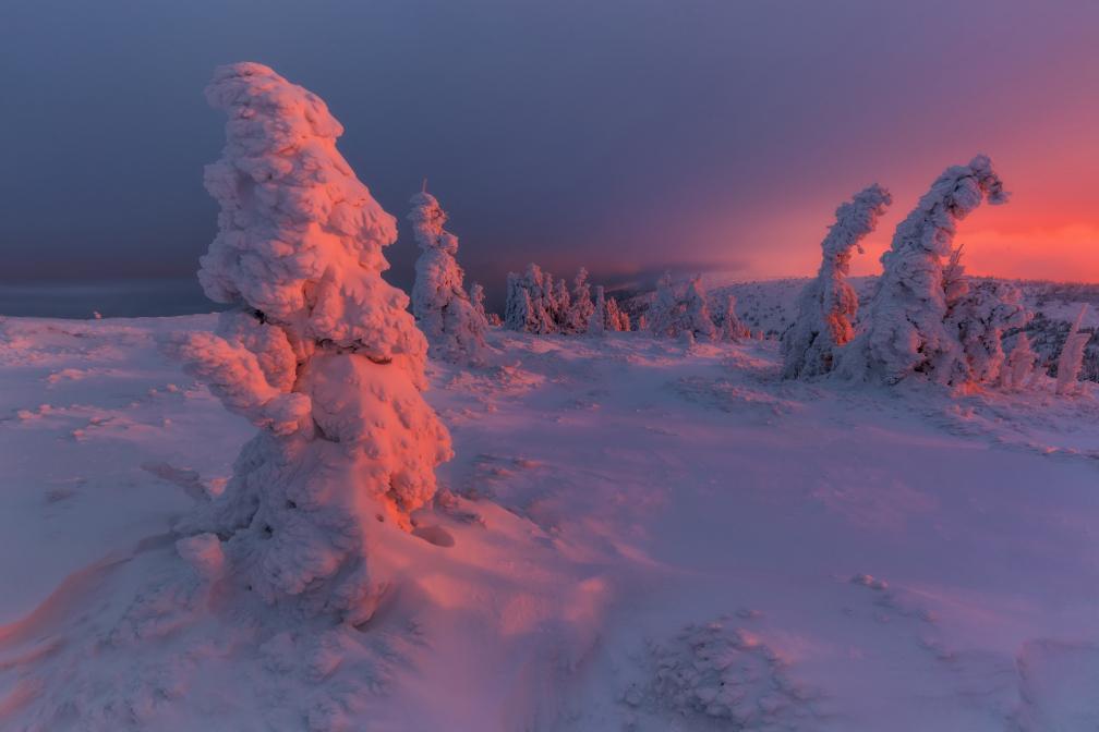 Barvy zimy