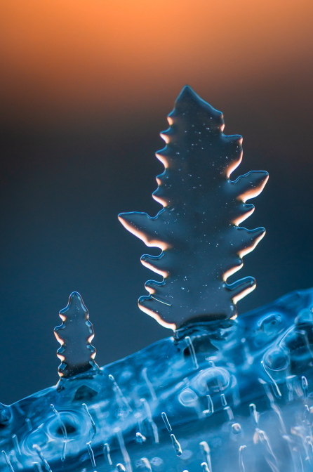 Ľadové stromčeky