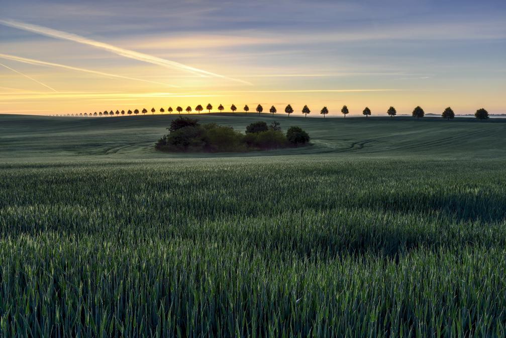 Morning in the Rye
