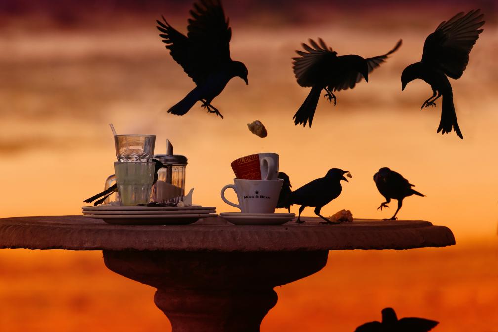 Überfall der Starlinge